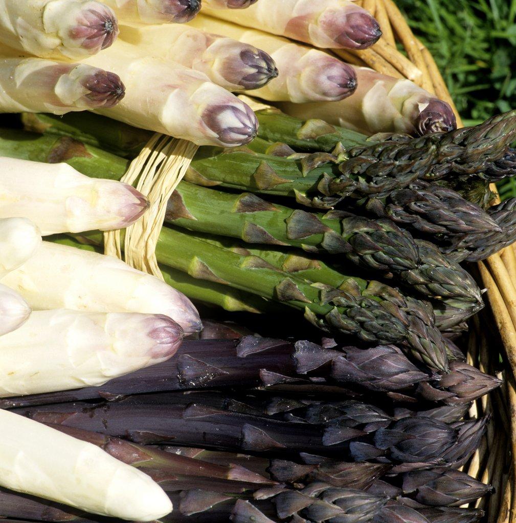 Comment Planter Des Asperges asperge : planter et cultiver – ooreka