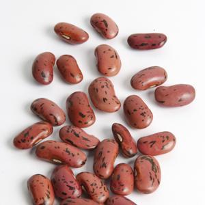 Pour la récolte des graines 'Scarlet Emperor'