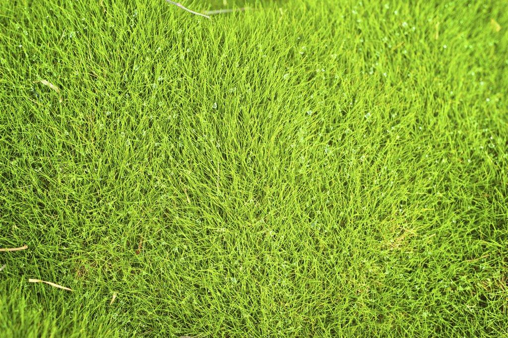 Quand planter zoysia - Quand planter des hortensias ...
