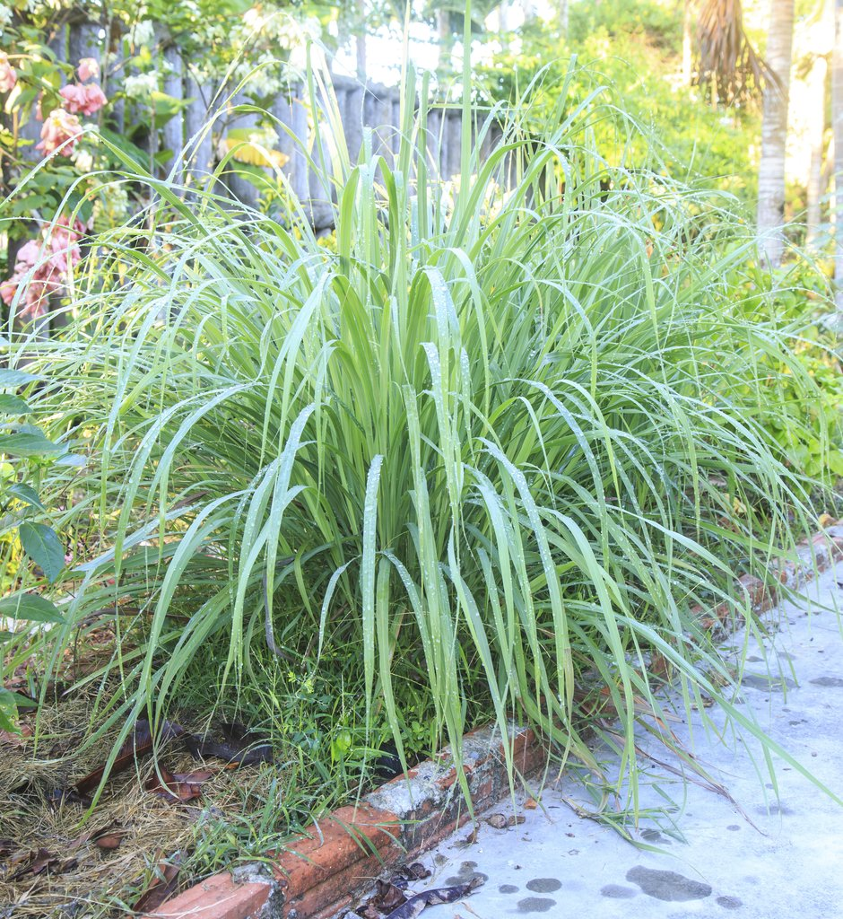Bamboo Garden Landscaping Planters