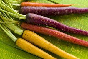Semis de la carotte