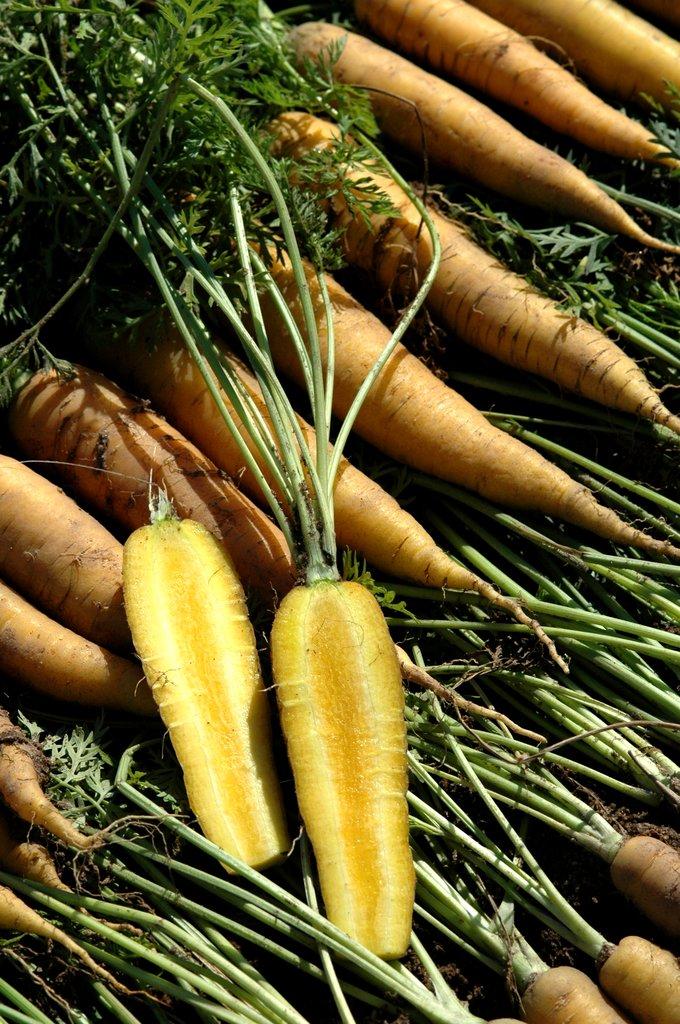 le baton et la carotte pdf gratuit