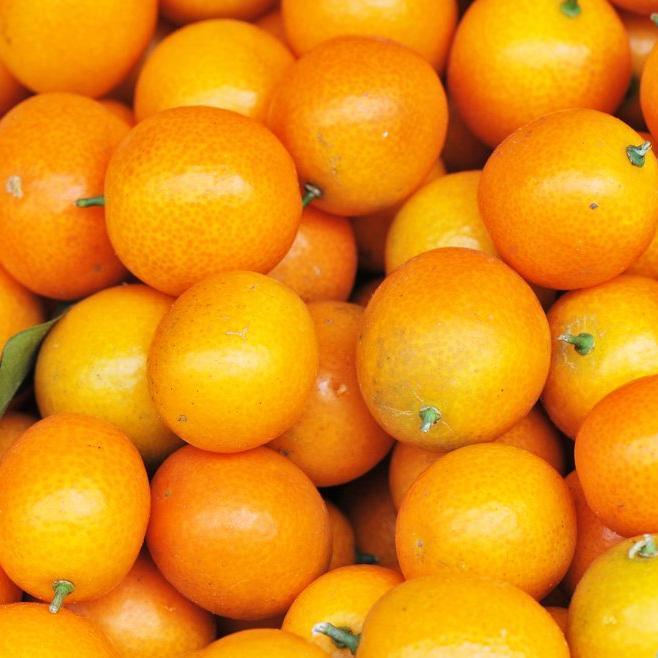 Kumquat rond ou Marumi (Fortunella japonica)