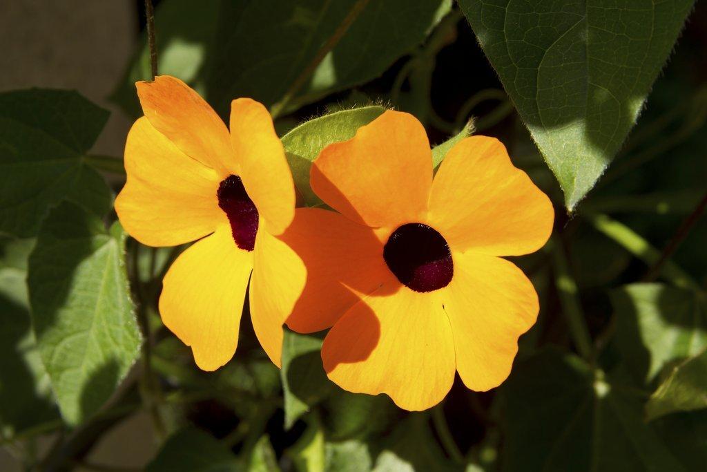 suzanneauxyeuxnoirs planter et cultiver � ooreka