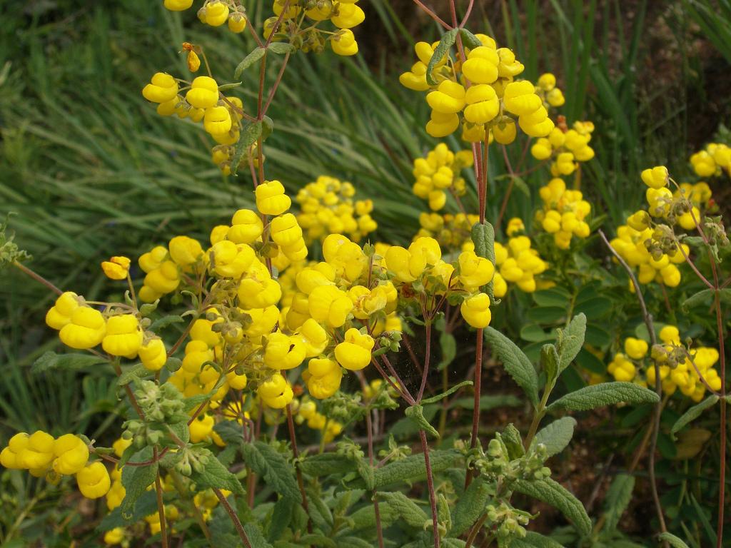 Calc olaire planter et cultiver ooreka for Tous les plantes