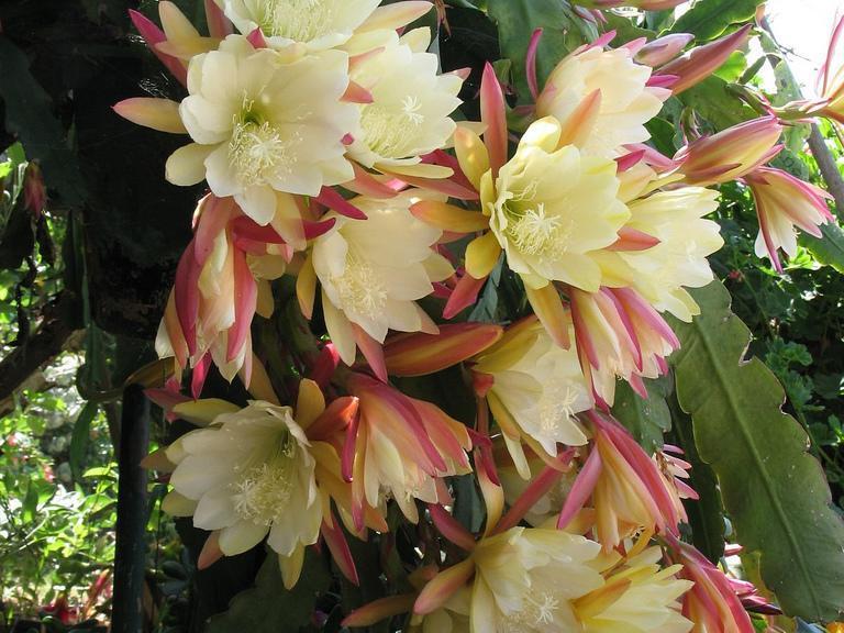 une plante Martin 18 janvier trouvée par Ajonc MainImage-full-12193821