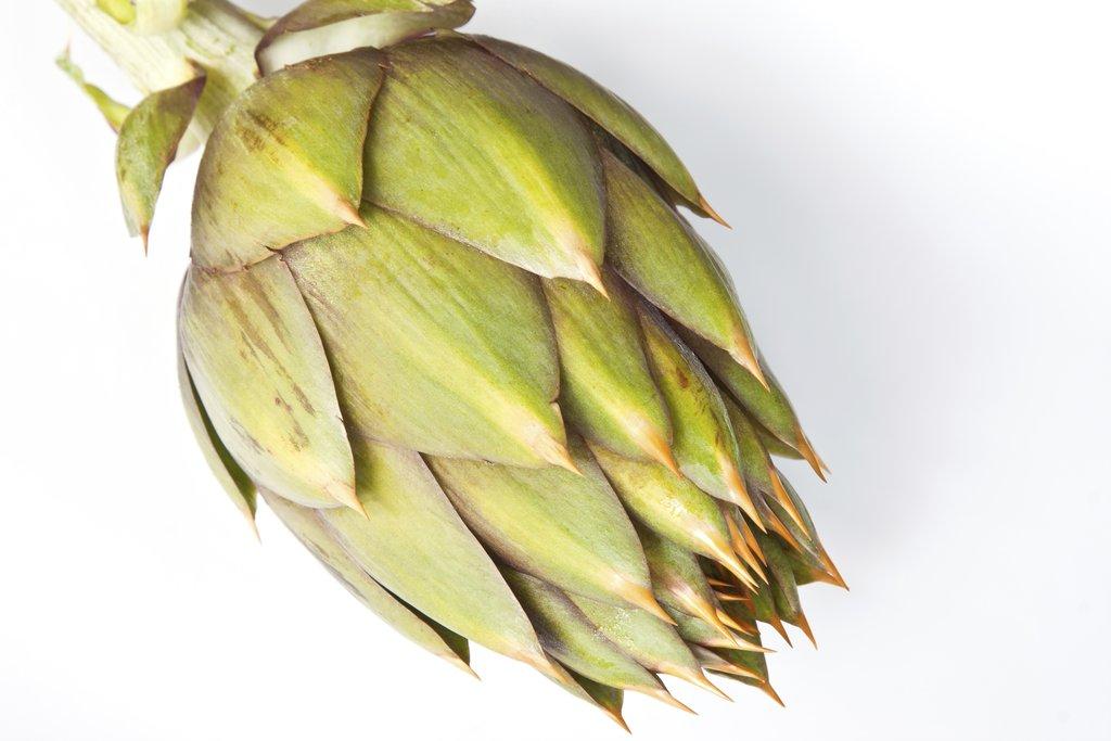Artichaut planter et cultiver ooreka for Plante ornementale