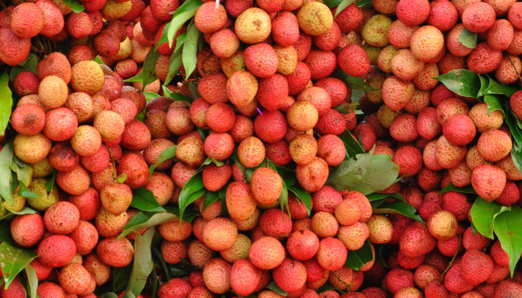 how to eat litchi fruit