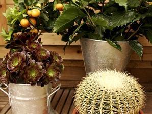 Culture et entretien d'<em>Echinocactus</em>