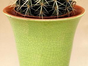 Plantation d'<em>Echinocactus</em>