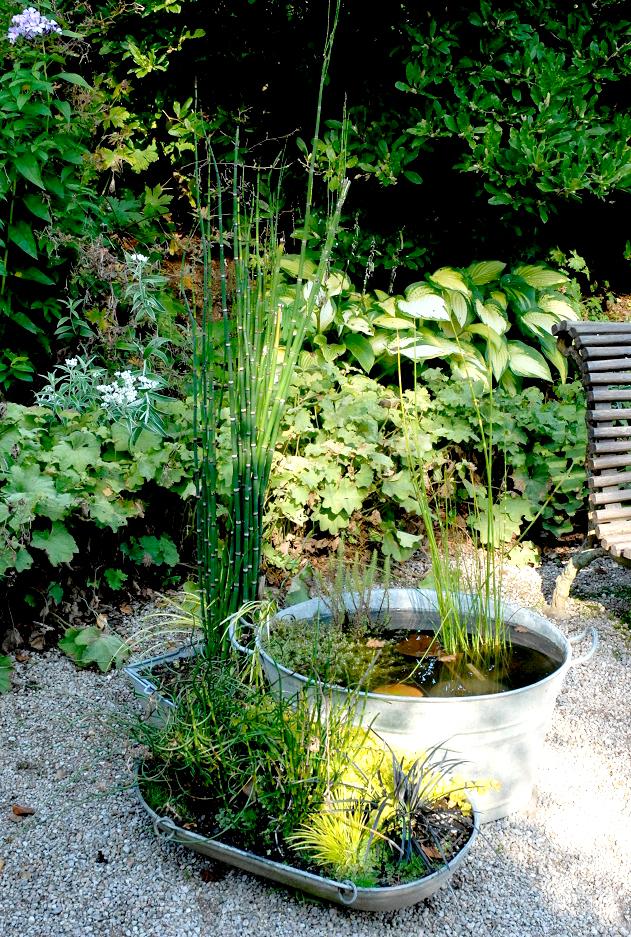 Jonc des chaisiers cultiver et entretenir ooreka for Plantes decoratives jardin