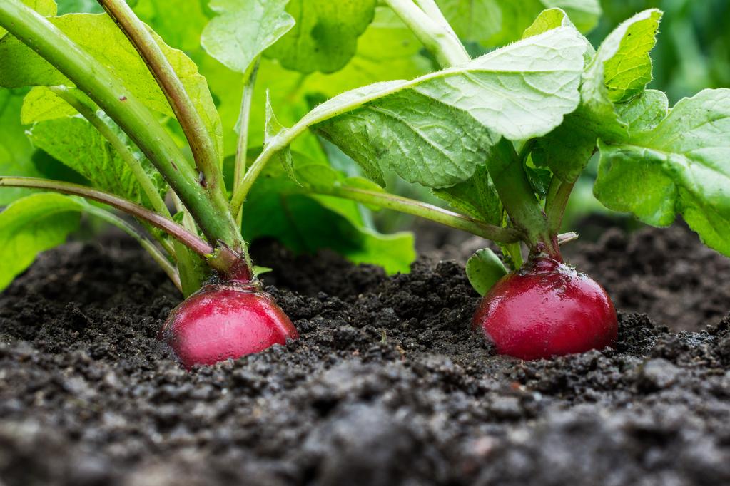 Quel légume planter en septembre