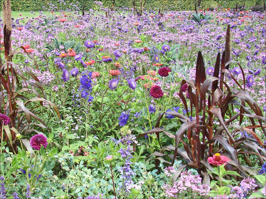 100 Génial Idées Quelles Fleurs Planter En Mai Et Juin