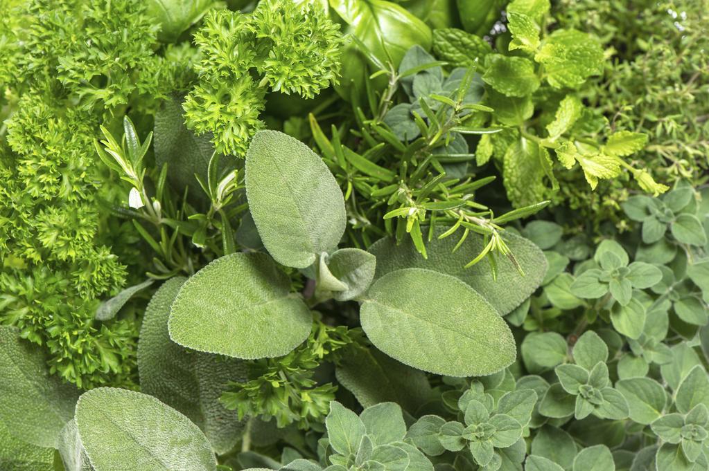 Quelles plantes aromatiques planter en mars for Ou acheter des plantes