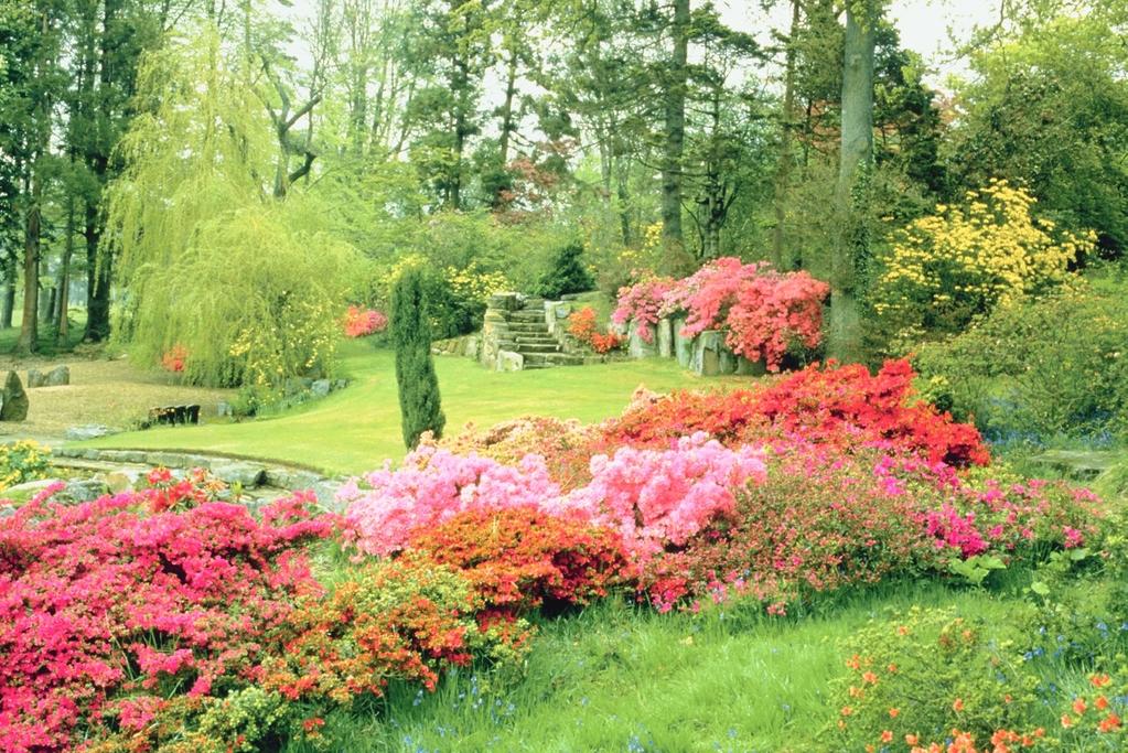 quelles plantes fleurs tailler en avril. Black Bedroom Furniture Sets. Home Design Ideas