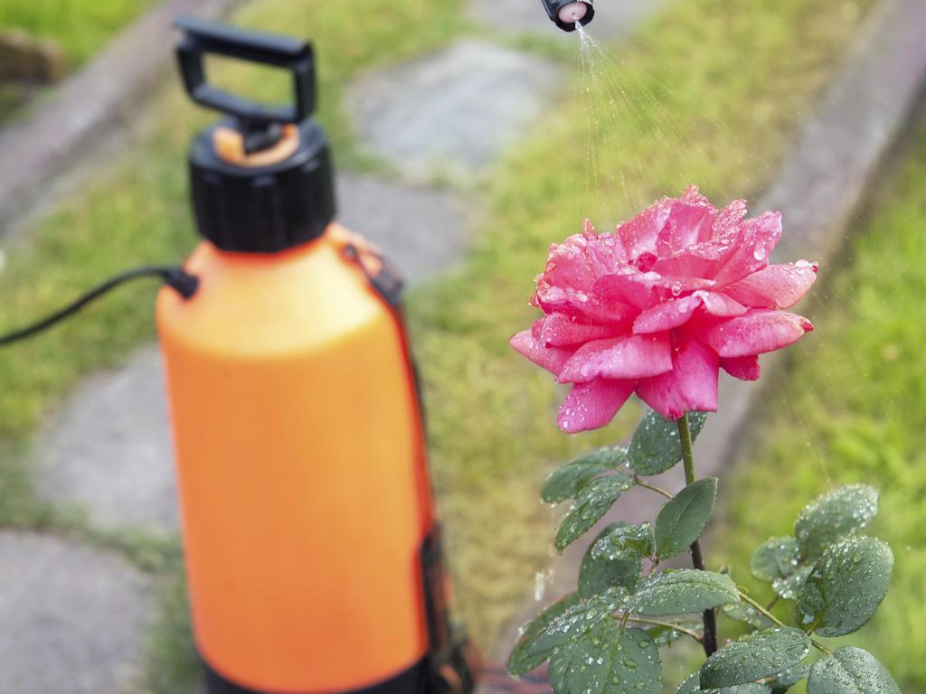 Fongicides naturels du jardin