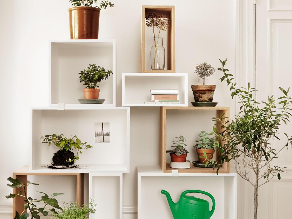 Suspension Pour Plantes D Intérieur plante appartement : liste - ooreka