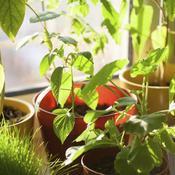 Optimiser La Lumiere Pour Les Plantes D Interieur Jardinage