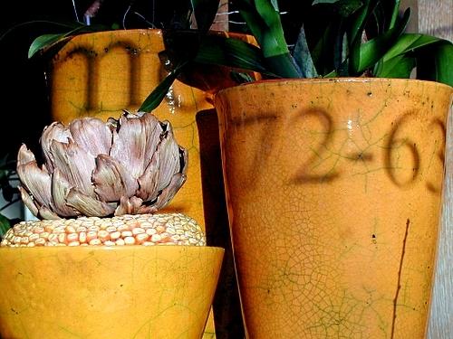 Manières D'intérieur Ses De Préserver Jardinage 7 L'hiver Plantes DIEH9W2