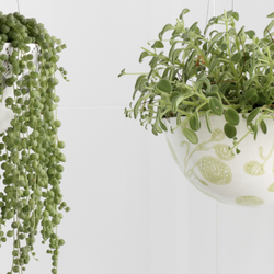 10 plantes suspendues