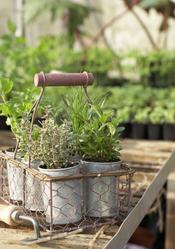 Faire pousser des plantes aromatiques