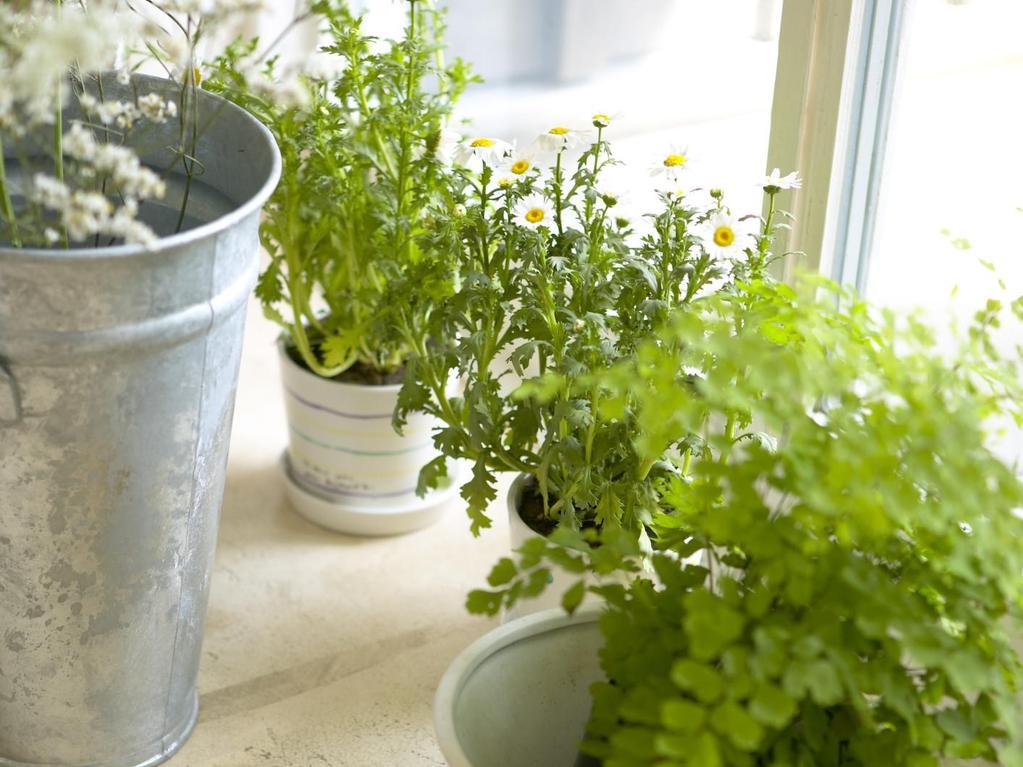 Quelles plantes pour illuminer son carrelage en travertin ?
