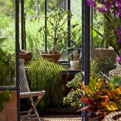 cultiver des plantes tropicales et m diterran ennes en v randa jardinage. Black Bedroom Furniture Sets. Home Design Ideas