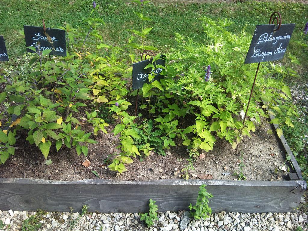 Planter Herbes Aromatiques Jardiniere quelles sont les plantes aromatiques à planter au printemps ?