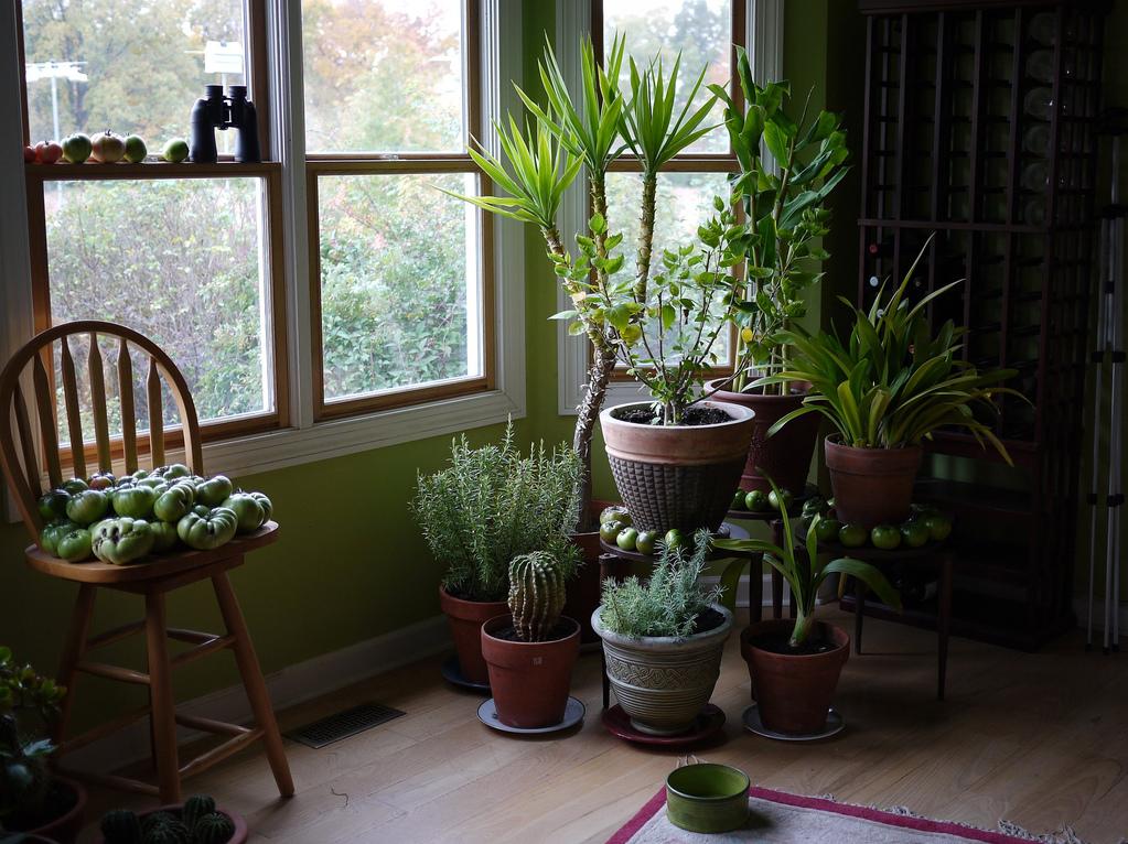 Quelles Plantes Pour Le Salon Liste Ooreka