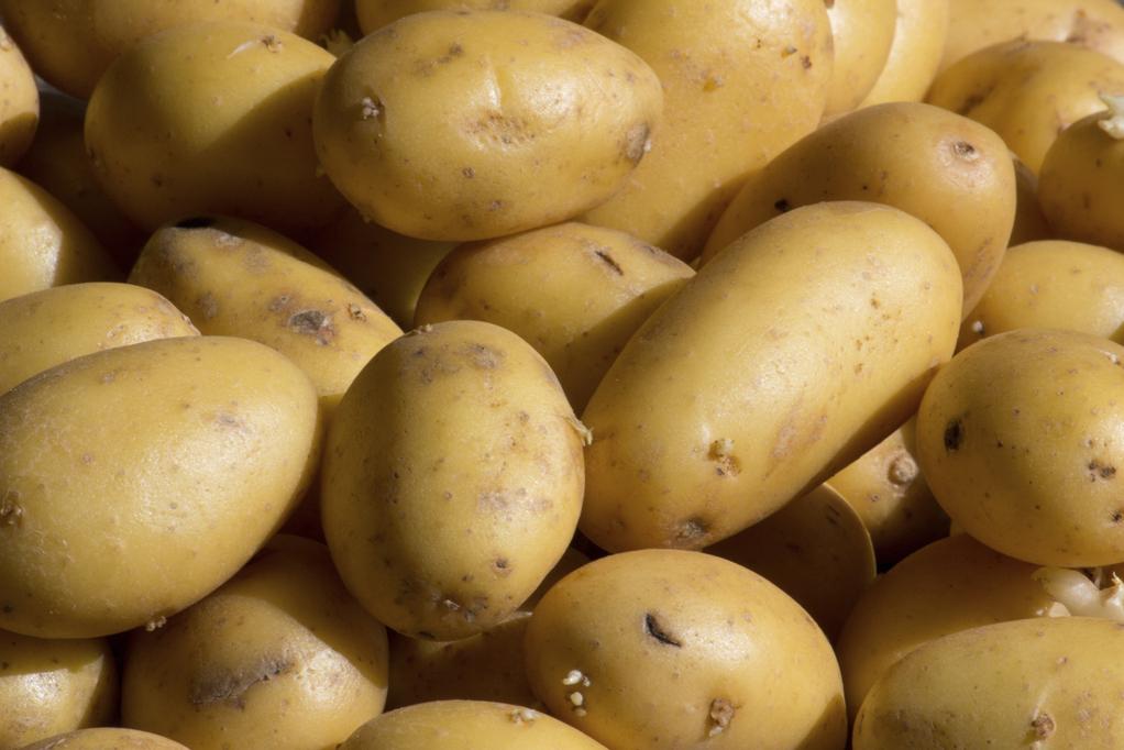 anti germe de pomme de terre : quelles solutions ? - ooreka