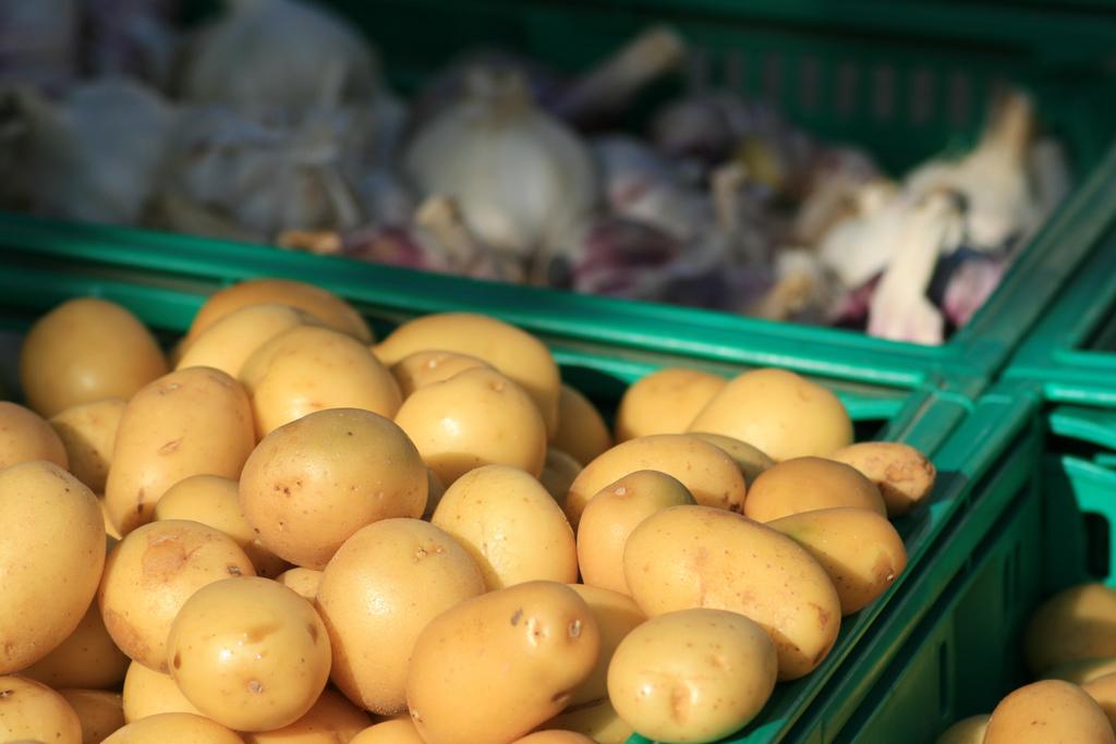 pomme de terre monalisa : origine, culture, consommation - ooreka