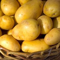 Pomme de terre Dolwen de Bretagne