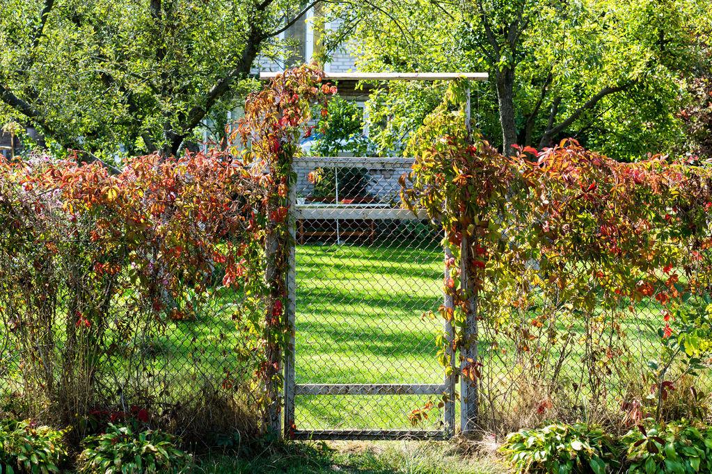 Porte grillagée jardin clôture en bois pour jardin | Chromeleon