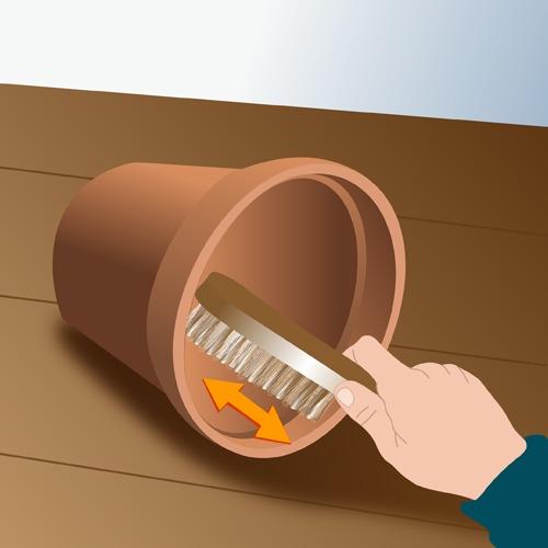 Brossez les pots en terre cuite  encrassés