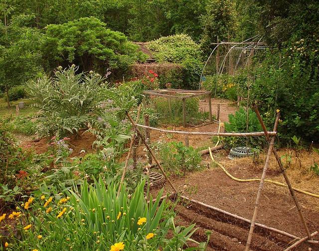 Quels l gumes planter en juin ooreka - Quel legume planter en aout ...