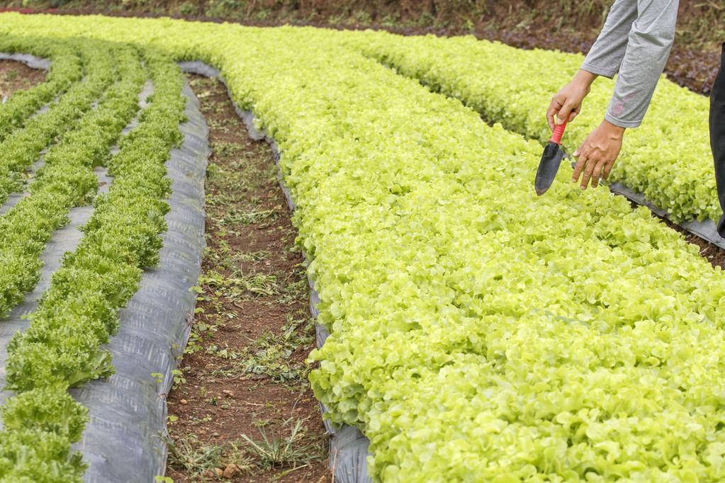 Bâche anti mauvaise herbe : critères de choix et prix - Ooreka