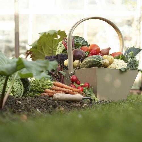 Cultiver des légumes bio