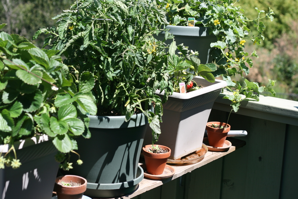 étagère Pour Plantes Modèles Et Prix Ooreka