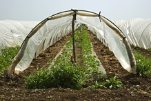 Accessoires potager : cloche, tunnel