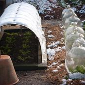 Protéger ses plantations de l'hiver