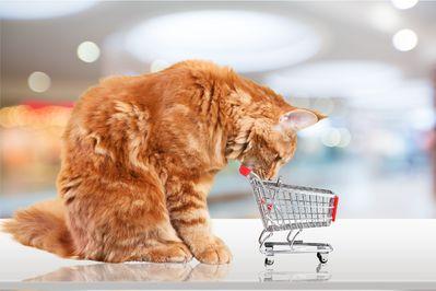 Prix d'un chat