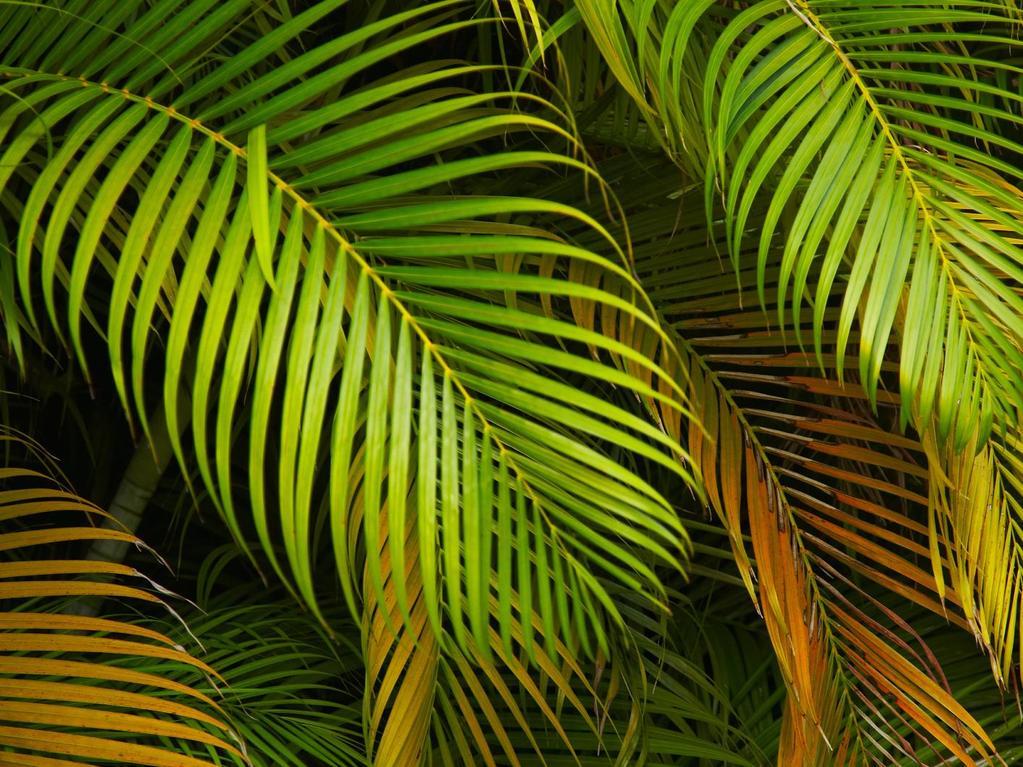Plante tropicale pour piscine