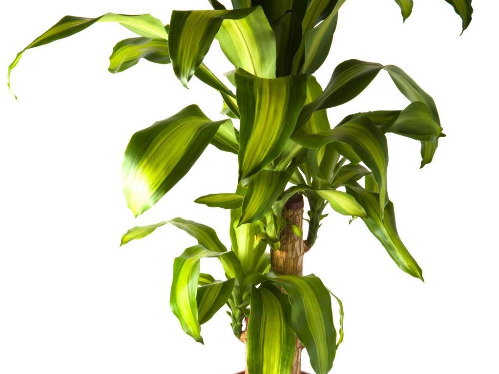 Plancher chauffant et plantes vertes r ussir la for Toutes les plantes vertes