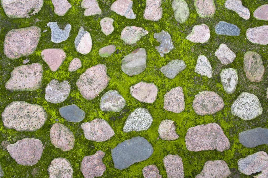 bien protéger votre terrasse en pierre des mousses ?