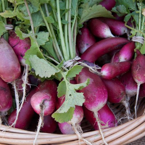 10 m de potager jusqu 39 95 d 39 conomie par an en - Quand cueillir les radis ...