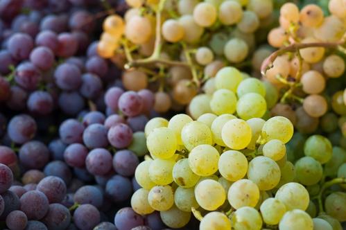"""Résultat de recherche d'images pour """"raisin"""""""