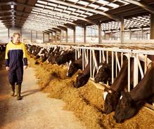 Société civile d'exploitation agricole (SCEA)