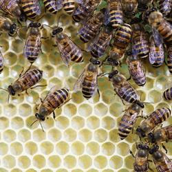 Utilité et particularités des rondins pour abeilles