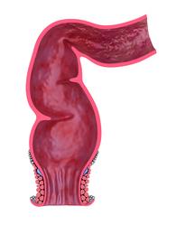 Schéma ebook rectum