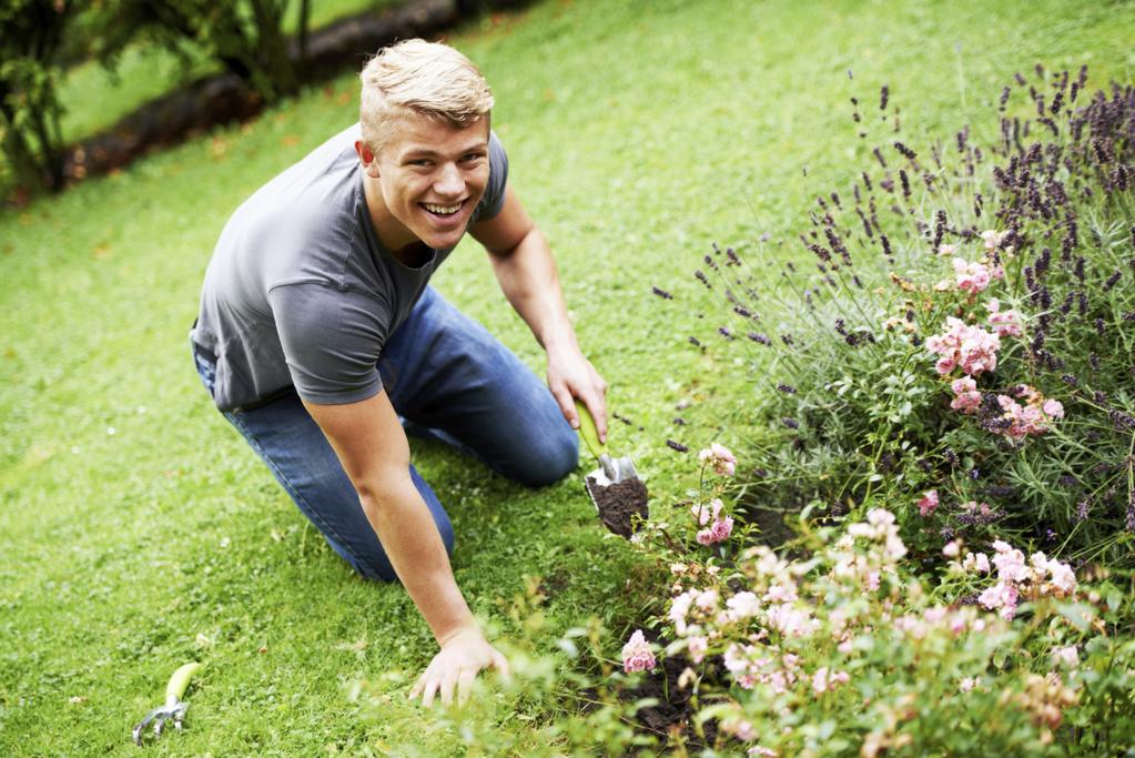 Bon plan recyclage de la cendre de bois au jardin for Cendre de bois au jardin